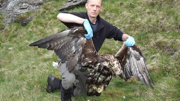 Silent witnesses: investigating wildlife crime in Scotland (3/4)