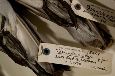 Museum specimens