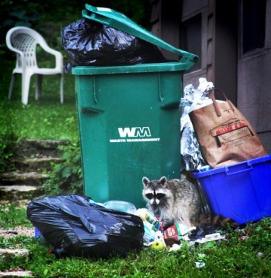 Animals like raccoons and foxes are examples of species that thrive in urban habitats by exploiting urban waste.