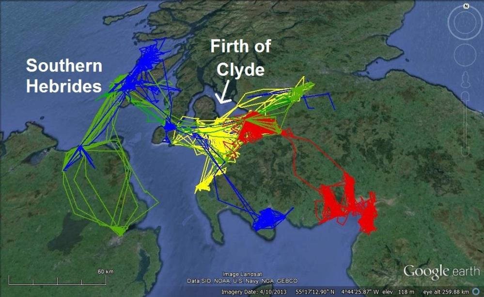 Using herring gulls to monitor the health of coastal marine ecosystems (3/4)