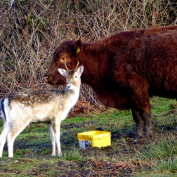 An unlikely friendship on Inchmurrin. ©Eleanor Dickinson