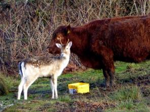 An unlikely friendship on Inchmurrin. ©Eleanor Dickinson