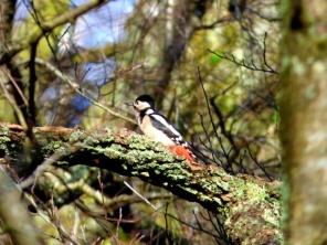 Woodpecker in the trees. ©Eleanor Dickinson