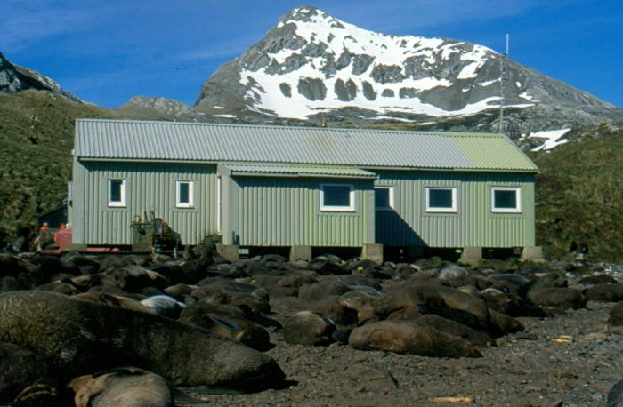 A little close for comfort: The British Antarctic Survey field station on Bird Island, South Georgia surrounded by Antarctic fur seals on the beach.