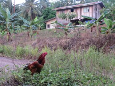 A typical village scene in Sabah, Malaysian Borneo. ©Rebecca Brown