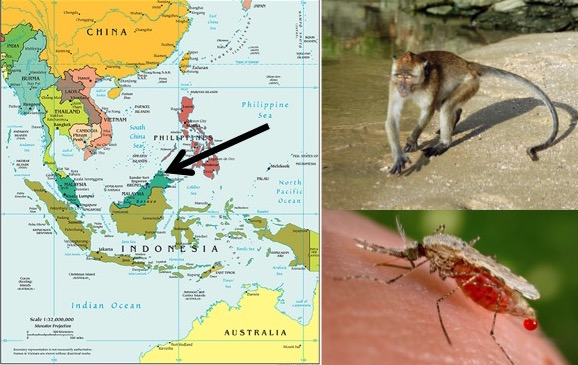 Left: A map of Southeast Asia, with black arrow pointing to Sabah (CIA; Public Domain); Top Right: Long tailed macaque (Macaca fasicularis; by Kallerna [CC BY-SA 3.0]); Bottom Right: Anopheles mosquito (Public Health Image Library; Public Domain).
