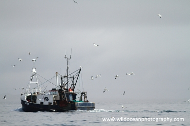 A fishing trawler heading back to port in the morning fog Isle of Lewis, Outer Hebrides, Scotland, UK