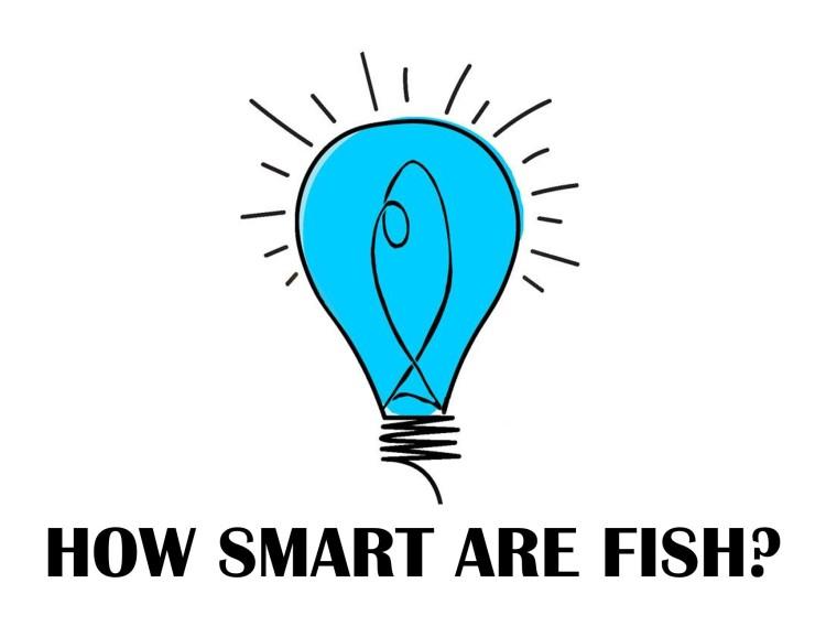 smartfish_logo