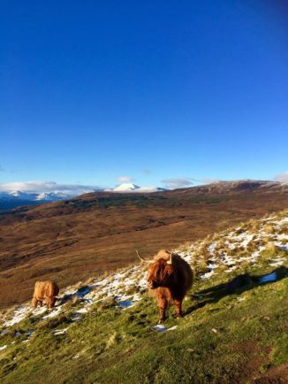Living at SCENE offers easy access to hiking to scenic landscapes and sometimes Highland cows. Photo by Danielle Orrell.